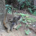 Madagascar Day Tour – Andasibe Rainforest and Vakona Forest Lodge and Reserve