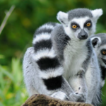 Kayaking and Camping Tour in Madagascar (with Lemurs!)
